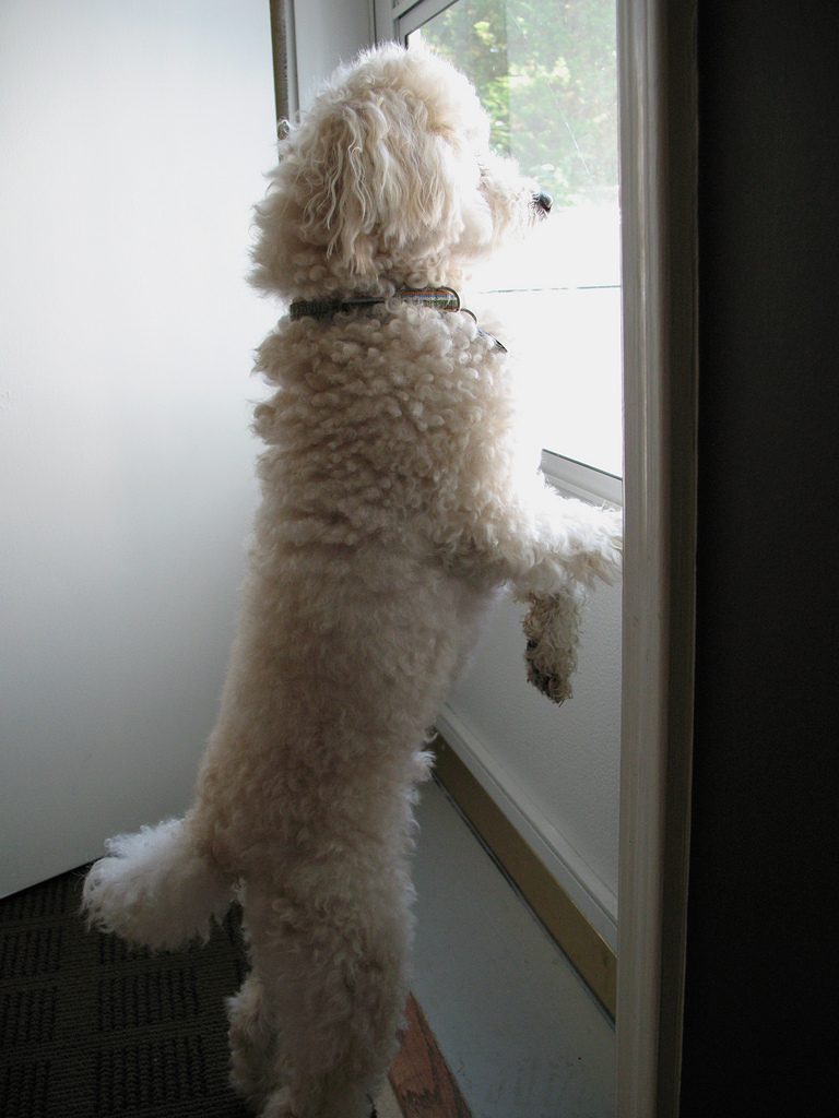How To Handle Separation Anxiety The Balanced Canine