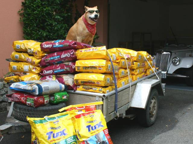 Donating Dog Food Homeless